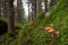 Mushroom landscape Royalty Free Stock Photography