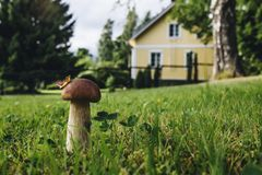 Mushroom on the lawn near the house Stock Photography