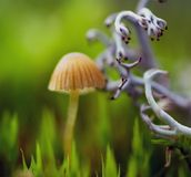 Mushroom and lichen. A autumn day royalty free stock photography