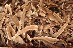 Mushroom Lingzhi Dry Many Stock Images