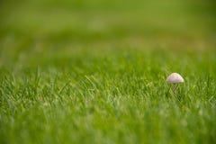 Mushroom. Little mushroom in a golf court Royalty Free Stock Photos