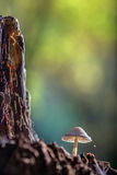 Mushroom with a little spider. Royalty Free Stock Photos