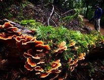 Mushroom log Stock Image