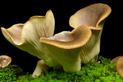 Mushroom. A lot of mushrooms grown up Stock Photos