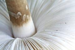 Mushroom macro. Macro image of a fresh mushroom cap stock images