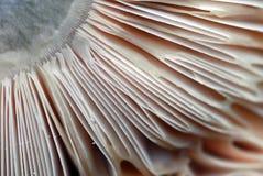 Mushroom Macro. An extreme close-up of the bottom of a wild mushroom Stock Photo