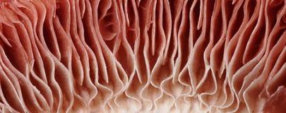 Mushroom macro detail Stock Photo