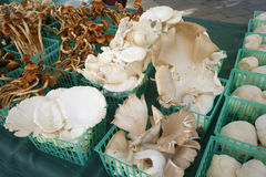 Mushroom market Royalty Free Stock Photography