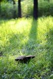 Mushroom in meadow Royalty Free Stock Image