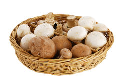 Mushroom mix in straw basket Royalty Free Stock Images