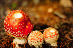 Mushroom mommy with kids Royalty Free Stock Photography