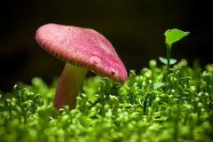 Mushroom on moss Royalty Free Stock Photography