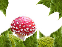 Mushroom in the moss Royalty Free Stock Photography