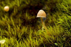 Mushroom in moss Stock Photo