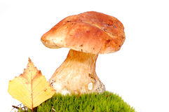 Mushroom in moss. A mushroom sitting on moss with a leaf next to it isolated on white Royalty Free Stock Photography