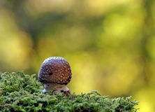 Mushroom in the moss with bokeh Royalty Free Stock Photos