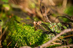 Mushroom in moss in forest Royalty Free Stock Images