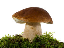 Mushroom with moss on white Stock Images