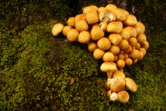 Mushroom and mosses Royalty Free Stock Photos