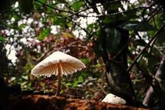 Mushroom;mushroom gills Royalty Free Stock Image