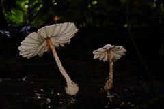 Mushroom;mushroom gills Royalty Free Stock Photos