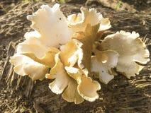 Mushroom. stock image