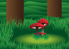 Mushroom. Royalty Free Stock Photography