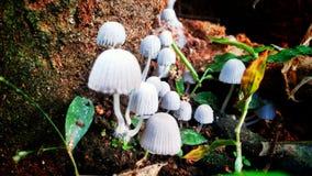 Mushroom. S grown in wild Royalty Free Stock Photos