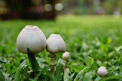 Mushroom. Natural nature Stock Photos