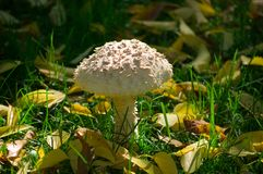 Mushroom among nature royalty free stock photography