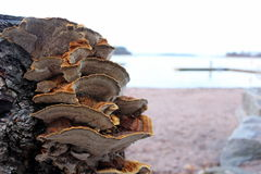 Mushroom near the beach. When the forest meets the sea Stock Image