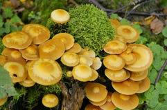 Mushroom On Stub Royalty Free Stock Image