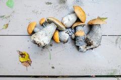 Mushroom orange-cap boletus Royalty Free Stock Images