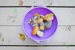 Mushroom orange-cap boletus Stock Photography