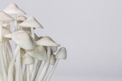 Mushroom ornament. Plant food background Stock Image