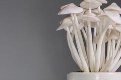 Mushroom ornament. Plant food background Royalty Free Stock Photos