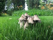 Mushroom. In our school yard Royalty Free Stock Photos