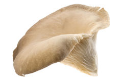 Mushroom - oyster. Mushroom isolated on the white Stock Photos