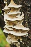 Mushroom pagoda Stock Photography