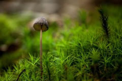 Mushroom. Photo of mushroom. Bokeh photo Stock Photos