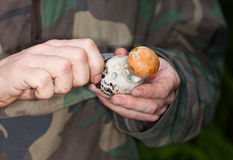 The mushroom picker. Cleans a knife the found orange-cap Stock Photos