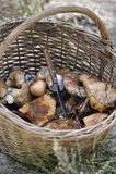 Mushroom picking Stock Image