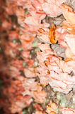 Mushroom pink blossom Royalty Free Stock Photos