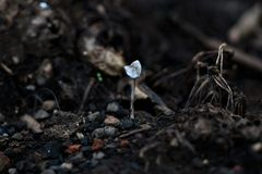 Mushroom plants grayish white stock images