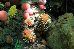 Mushroom poisoning Royalty Free Stock Images