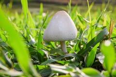 Mushroom poisoning (mushroom toxicity) Royalty Free Stock Photos