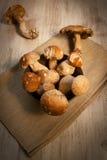 Mushroom porcini Stock Image