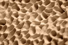Mushroom pores Royalty Free Stock Images