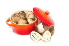 Mushroom in the pot Stock Image