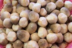Mushroom Prepare Cooking. In basket Stock Image